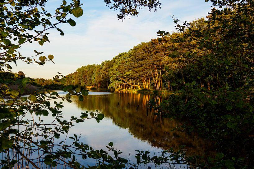 Trees on lake in Prerow, Germany. van Rico Ködder