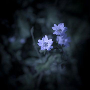 Blume im Wald von Elma Mud