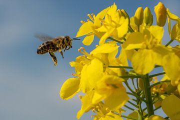 Scharfe Biene von Uwe Ulrich Grün