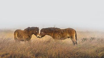 Pferde im Nebel von Martzen Fotografie