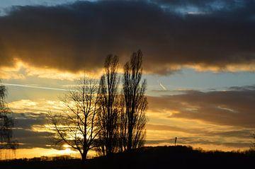 Abendrot mit Bäumen von Susanne Seidel