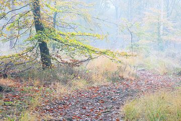 Ein Weg im nebligen Herbstwald von Olha Rohulya