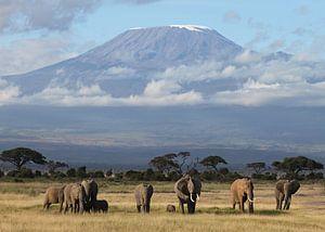Kilimanjaro Olifanten van Roland Smeets