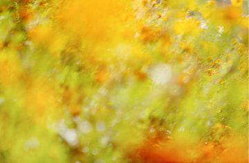 Ein impressionistisches Bild im Monet-Stil eines Blumenfeldes (Wiese) mit gelben, orangen und roten  von John Quendag
