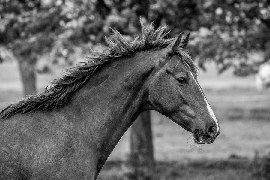 Portret van een paard van André Hamerpagt