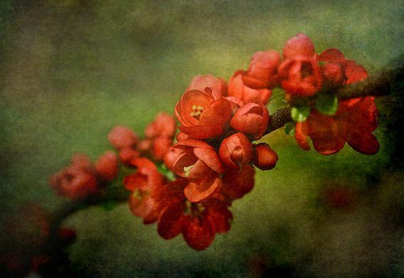 Rode Bloesem Groene Fine Art Achtergrond