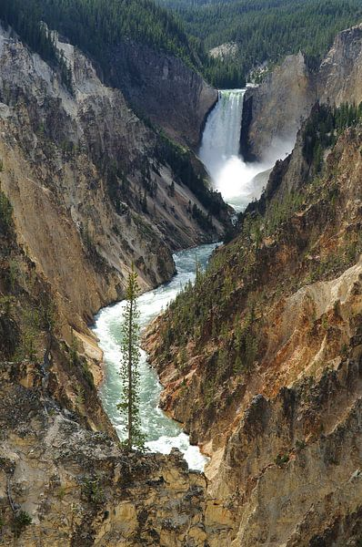 Yellowstone - Wyoming (VS) van Edwin van Amstel