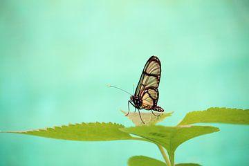 Vlinder in de tropen van