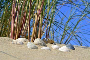 Muscheln am Strand van Susanne Herppich