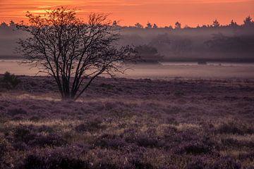 Sonnenaufgang auf der Hoorneboegse Heide von Connie de Graaf