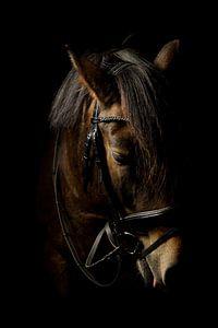 Pferdekopf, Farbe