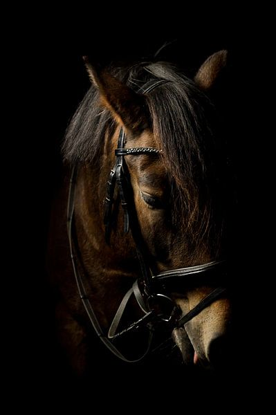 Pferdekopf, Farbe von Daniel Damnitz