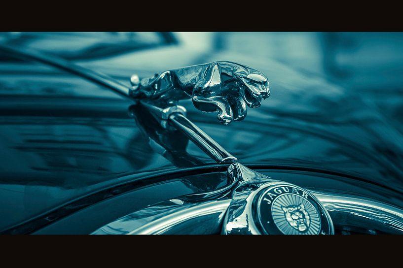 Jaguar van Chris Clinckx