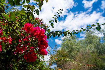Kleurrijke Rode tropische bloemen tegen zonnige zomerlucht van