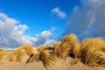 Dünenlandschaft Im Dezember von Ostsee Bilder