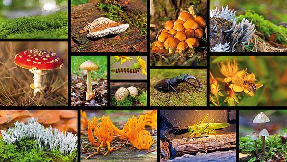 Collage macro landschap