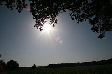 zon in het open veld von Thom Van Rhee