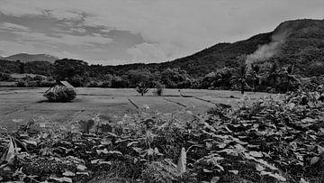 Schwarze und weisse Reisfelder thailand von Lynn's foto's