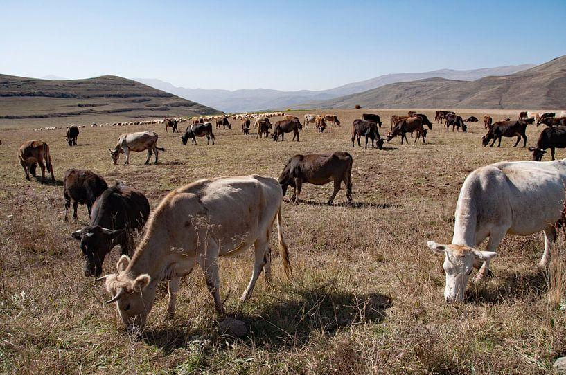 Grazende kudde in Armenië van Anne Hana