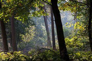 Lichtspel in het bos
