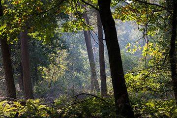 Lichtspel in het bos van