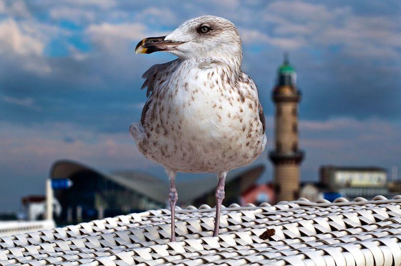 Freiheit an der Ostsee  von Silva Wischeropp