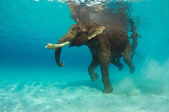 Zwemmende olifant van Karin Brussaard