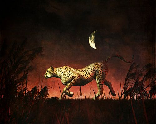 Jachtluipaard op jacht tijdens de nacht