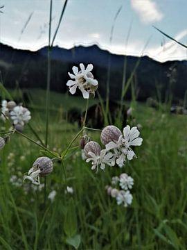 Bloemen in de natuur van Sharon vD
