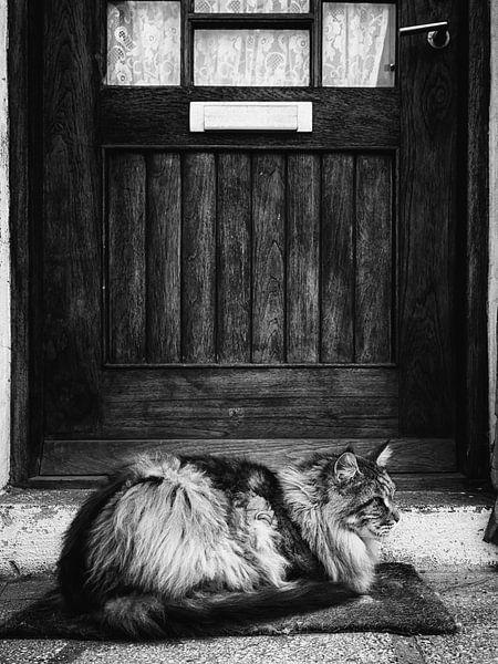 Waiting for my human (B&W) van Lex Schulte