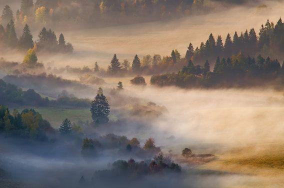 Misty morning van Wojciech Kruczynski