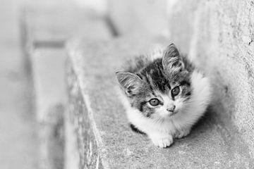 Kitten in Ecuador von Marjolein Boers