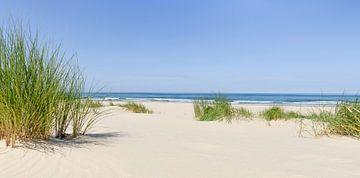 Herbe de dunes sur la plage de la mer du Nord un jour d'été en Hollande sur Sjoerd van der Wal