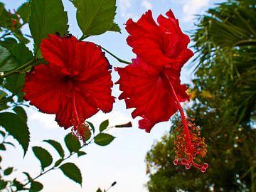 twee vlinders fladderen boven een bloem von