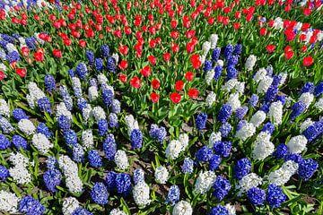 Bloemenveld met rode witte blauwe tulpen en hyacinten van Ben Schonewille