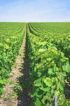 Weinberg in der Champagne in Frankreich von Daphne Groeneveld