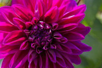 Flower 4 sur Eugene Klinkenberg