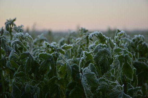 winterlandschap in Limburg van Fraukje Vonk