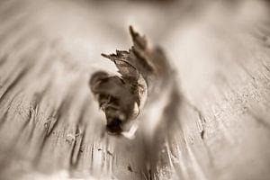 Boomblad van MPhotographer