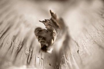 Baumblatt von MPhotographer