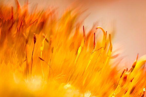 On fire van Marc Crutzen