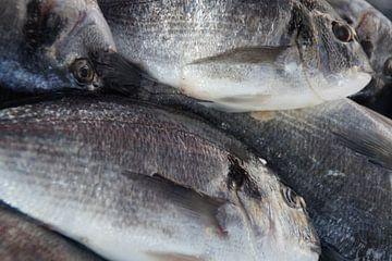 Fish / Vis, Marsaxlokk, Malta  van Maurits Bredius