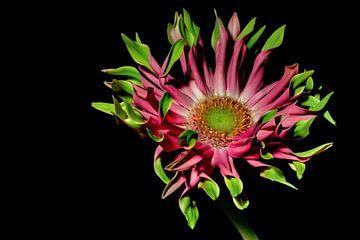 Bloemen droom 10 van Marcel Kieffer