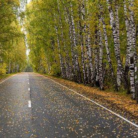 Straße durch einen Birkenwald im Herbst von Daan Kloeg