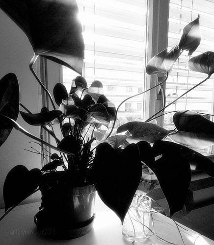 Light and Shadow 3 - Licht und Schatten 3 von