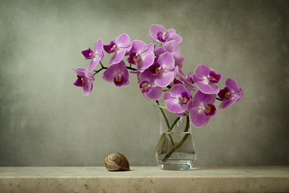 Schilderachtige orchidee