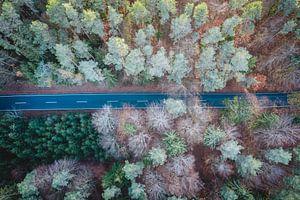 Luchtfoto van de weg tussen bos en bomen