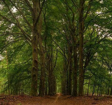 Langer Baumpfad von Arno van der Poel