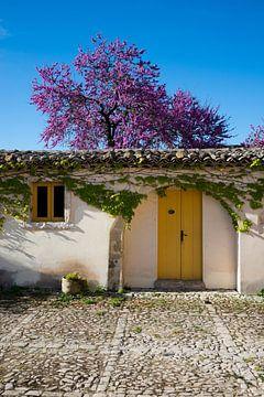 Altes Haus mit Blütenbaum auf Sizilien von Pieter Tel