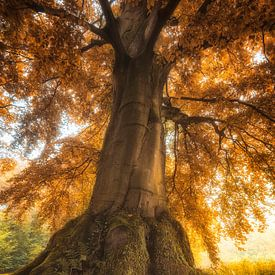 Herfstkleuren van Anthony Malefijt